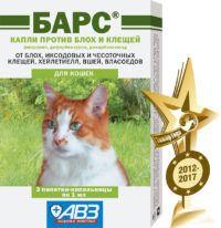 bars_kapli_insect_cat_tg